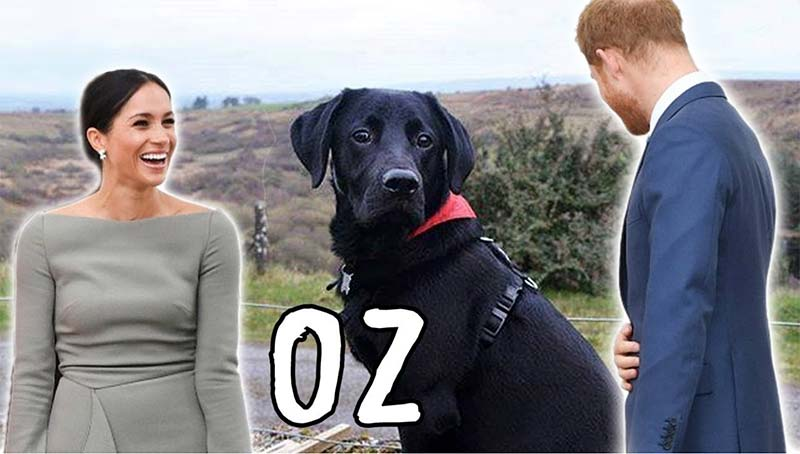 Meghan and Her Dogs- Oz